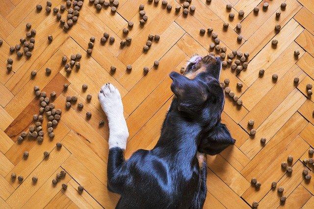 床に散らばったドッグフードを食べる犬