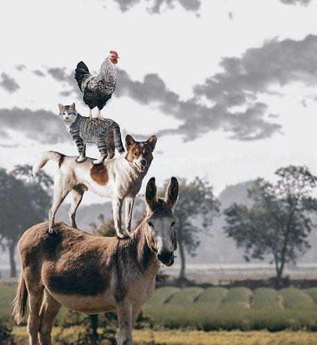 鶏、猫、犬、ロバ
