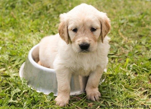 エサ皿に入った仔犬